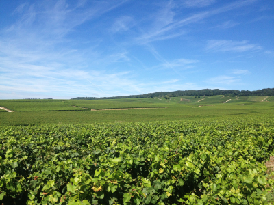 Ambonnay Grand Cru vineyards